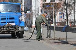 В Бобруйске на площади Победы высаживают шаровидные клены