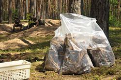 Тайны леса под Крапивкой. В лесу под Бобруйском найдено массовое захоронение людей времен Второй мировой войны