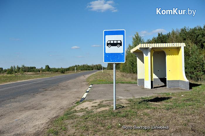 Бобруйский Хатико уже три месяца ждет хозяина наавтобусной остановке