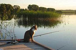 Запрещается лов всех видов рыбы в рыболовных угодьях Могилевщины.