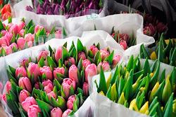 С 6 по 8 марта в Бобруйске работают площадки по торговле живыми цветами