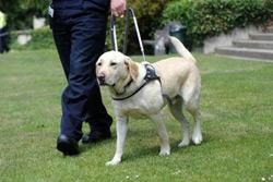 Собак особо опасных пород запретят держать в квартирах