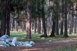 Тайна «мусорного леса»